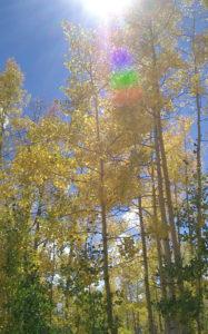 krw-mountain-trees